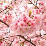 Top 10 loài hoa đẹp nhất thế giới có ý nghĩa tốt đẹp