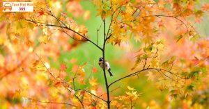 Lan man mùa thu sớm